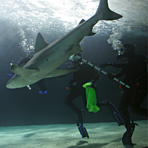 Deep-water Diving in Winter: A GoPro View of SEA LIFE Minnesota Aquarium at Mall of America®