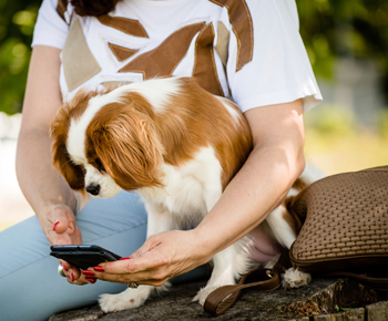 Ten tech innovations for the pet of the future