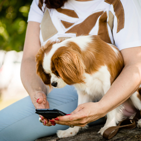 Ten tech innovations for the pet of the...