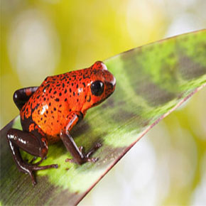 Apps to Find and Care For an Exotic Pet...